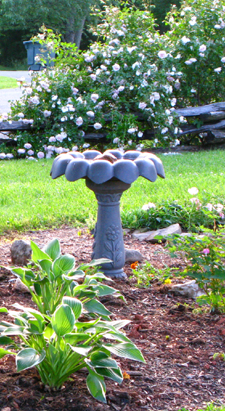 Our New Bird Bath