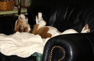 Roscoe Taking a Snooze